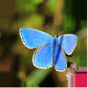 La prigione della farfalla azzurra - Virginia Woolf Project ViWoP